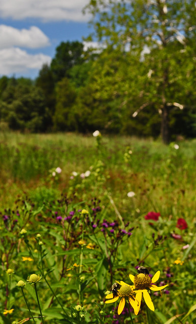 July Meadow (5)