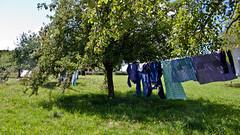Clean laundry (Elise de Korte) Tags: france was country orchard laundry campagne boomgaard appletree pommier waslijn platteland lavelinge wasgoed appelboom schonewas