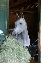 (John Donges) Tags: horses track gray stall racing hay stable equine 4466 delawareracetrack