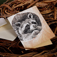 Raccon (snailspacepaper) Tags: environment wildlifecards naturecards recycledcards