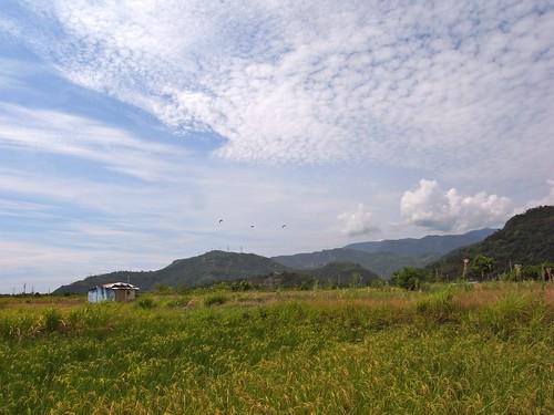 冠宇小美自然農 雁鴨喜歡光臨的水田區