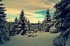 8.- Snowshoeing in Transylvania (David Ruiz Luna) Tags: snow mountains landscape romania transylvania doubleniceshot mygearandme mygearandmepremium mygearandmebronze mygearandmesilver mygearandmegold
