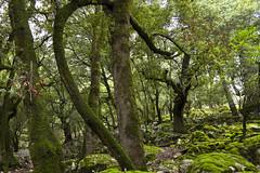 Foresta di Sas Vaddes                      (Sas Baddes) (candido33) Tags: sardegna natura canyon orgosolo barbagia boschi foreste lecci supramontediorgosolo orgosolo forestadisasvaddessasbaddes nuraghesupresetutortu nuragheintrodepadentemereu
