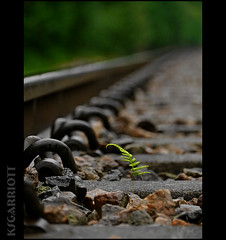 Grow (KSGarriott) Tags: railroad plant fern green nature lumix track steel grow rail railway ground panasonic rails distance vegitation folliage vanish gh2 tonemap 14140 artizen ksgarriott scottgarriott