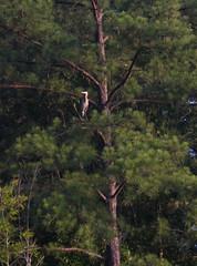 treed Photo