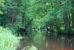 Welcome to the Jungle (ellekayyy) Tags: brown tree green nature water creek river mirror wasser spiegel natur bach grn braun fluss baum sogopro