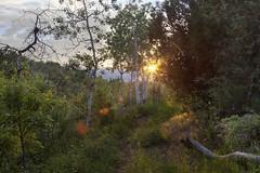 Heber Sunset