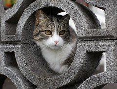 Maje okno (cat window) (Spejal Agent) Tags: cute window animals cat fun outside kitty belo maka sivo okno muci ograja firsttheearth krogi betonska