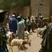 Aqui estão eles vendendo suas cabras