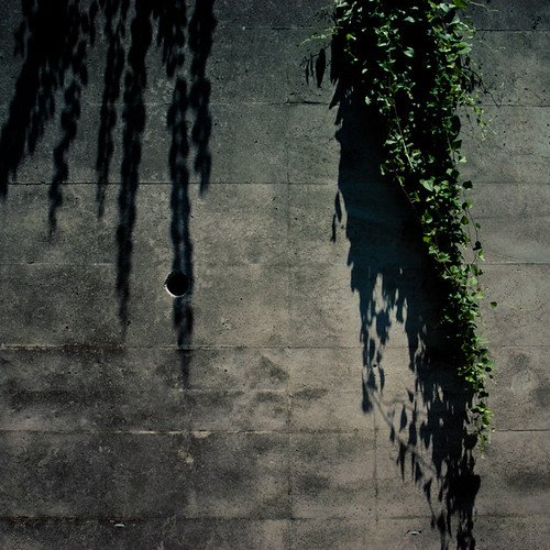 VIne in Sync with Wall