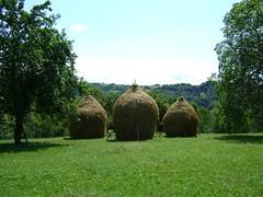 lungul drum al fanului spre iesle (bseteanu) Tags: summer grass landscape fan hay greenfield maramures vara peisaj