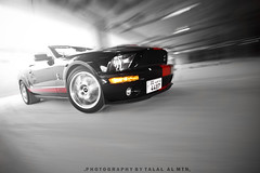 SHELBY (Talal Al-Mtn) Tags: blue ford cobra rig kuwait gt fordmustang  talal kuwaitcity supercharged svt q8 fordgt dyno gt500 kwt shelbygt500 mustangcobra mustangshelby shlby   rigshot  lm10 fordmustangshelby almtn     shelby2008 mustanginkuwait talalalmtnphotography photographybytalalalmtn  mustangsupercharged shelbyinkuwait talalalmetn mustanggtsupercharged almetn  quottalal almtnquot shelbysupercharge streetracingkuwait