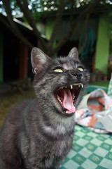 Yawn (MERIDAni) Tags: animal cat canon kitten hungary yawn macska cica st