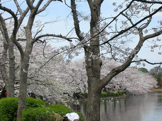 d7-21-ueno-park