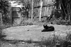 [201/365] Cat as Black (Dodzki) Tags: nikon july pcc 2011 cebusugbo d5000