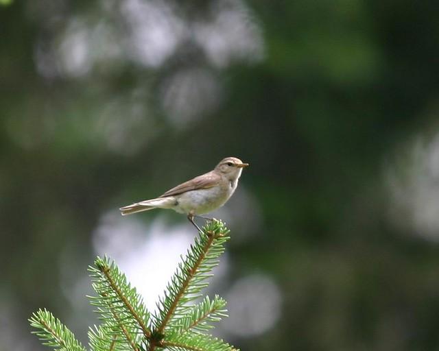 Неизвестная птица