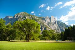 Oaks (sirgious) Tags: california trees nationalpark yosemite oaks polarizer sentinelrock