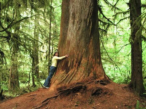 Tree Hugger 2001