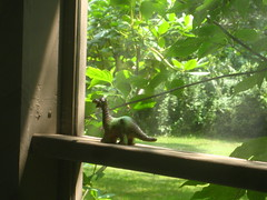 dino on my writing porch