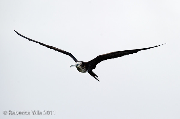 RYALE_Galapagos-175