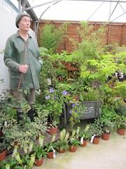 Welcome to Manor Nurseries (wallygrom) Tags: england westsussex hibiscus eucomis angmering pineapplelily july2011 manornursery frankthemanorman manornurseries diervillea hibiscusbluechiffon