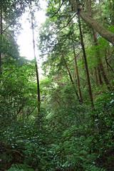 瀬上市民の森(森の中)(Segami Community Woods)