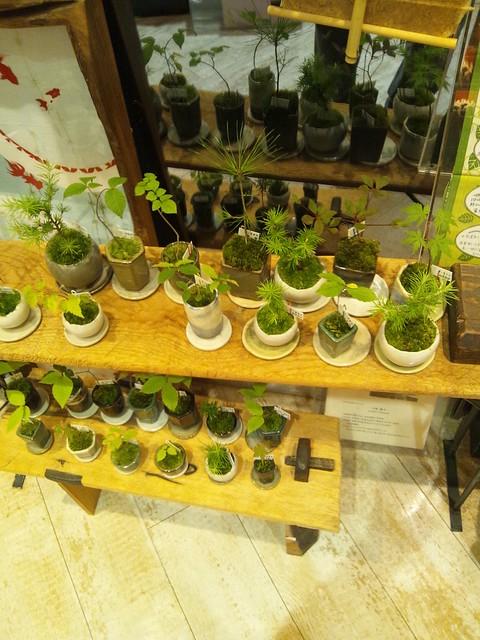さくら平安堂にあった和風鉢植えの写真