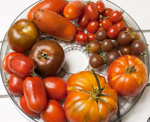 tomato-go-round... by credd