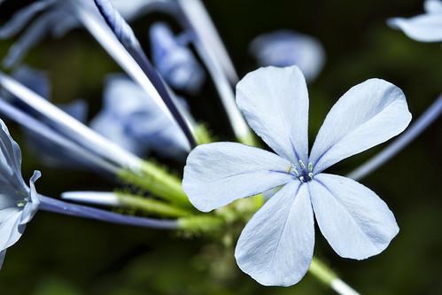 AC Flower 2