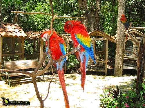 Endangered Macaws Center