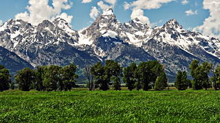 Green Field in the Tetons