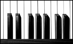 If you can read music, feel free to add notes!!!  I've added a C and a D (Jonny Hirons) Tags: blackandwhite bw abstract keys piano barcode blacknwhite