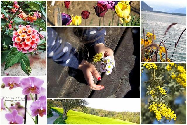Mosaico Flores 7