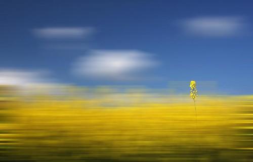 Flower Blur