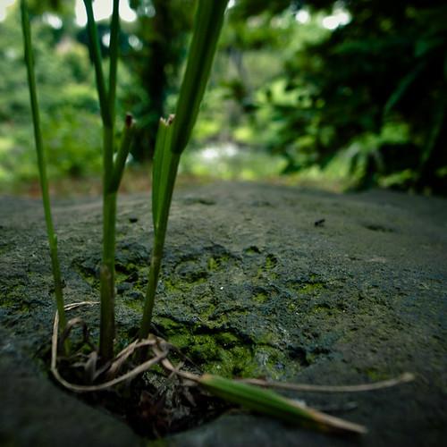 Grass pon Rock, Mukojima Hyakkaen Garden