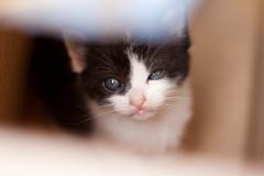Filhotes (Vandr Fraga) Tags: blackandwhite cats canon gatos kitties filhotes