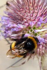 Thistle While You Work (JonCoupland) Tags: urban house flower abandoned overgrown field grass plane butterfly death site jon clare wasp grafiti crash balcony thistle air ghost lincolnshire haunted bee story lincoln disused tiff derelict runway potential hdr grange raf hoverfly coupland urbex kithcen coleby tonemapped