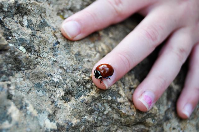 her ladybug friend