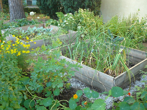 Portland backyard garden