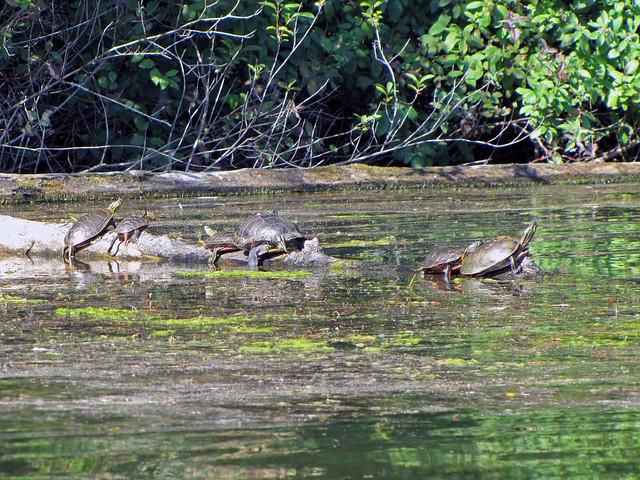 2011-08-07 Elk Lake_0008