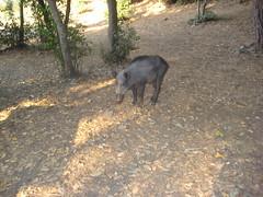 IMG_2454 (Egemen Akbudak) Tags: karasu millipark domuz güzelçamlı