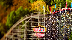 Tilt-shift photography of Raven