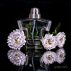 A perfum ... (Rebeca Mello) Tags: flowers stilllife flores reflection photoshop canon studio perfume perfum legacy rebeca parfum cs5 eos50d canoneos50d colorphotoaward refelexos mcmello rebecamello daarklands sbfmasterpiece sbfgrandmaster rykielrose