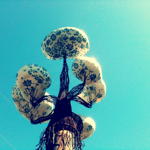 Witness Tree: Jen Dixon