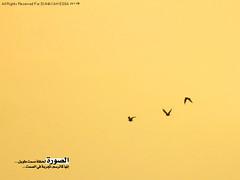 Photography :$ ( SUMAYAH ) Tags: