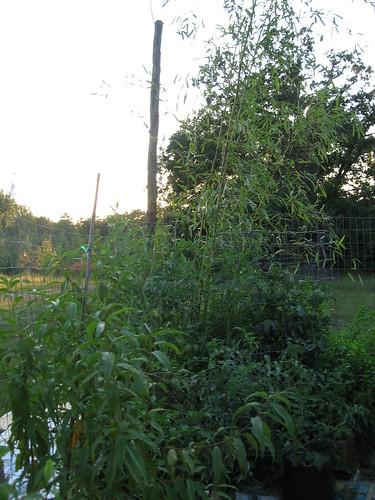 garden, sept 2011 016