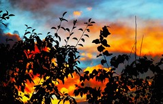 A beautiful silhouetted sunset (peggyhr) Tags: blue friends sunset sky orange canada black yellow clouds bc silhouettes quesnel wow1 wow2 fqs 50faves peggyhr bestsun theperfectphotographer colourvisions afeastformyeyes 100commentgroup flickraward mygearandme ringexcellence quartasunsetsunsetwednesday blinkagainforinterestingimages redgroupno1 p1030906ap