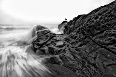 Crash [Explored] (Edwin_Abedi) Tags: ocean sanfrancisco california sea blackandwhite bw beach rock bay baker wave goldengate
