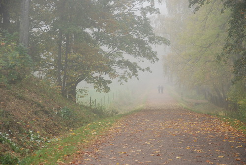 the woods on a foggy day
