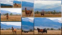 Horses... (harpazo_hope) Tags: horses collage picasa tamron vc usd 70300 d90